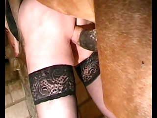 Animal Stallionsex Stallion Do Woman Movie 2